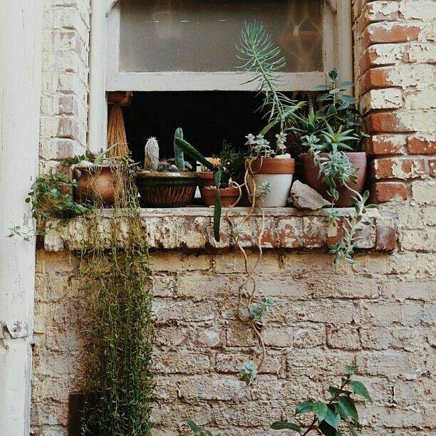 4241 best images about botany on pinterest. Black Bedroom Furniture Sets. Home Design Ideas