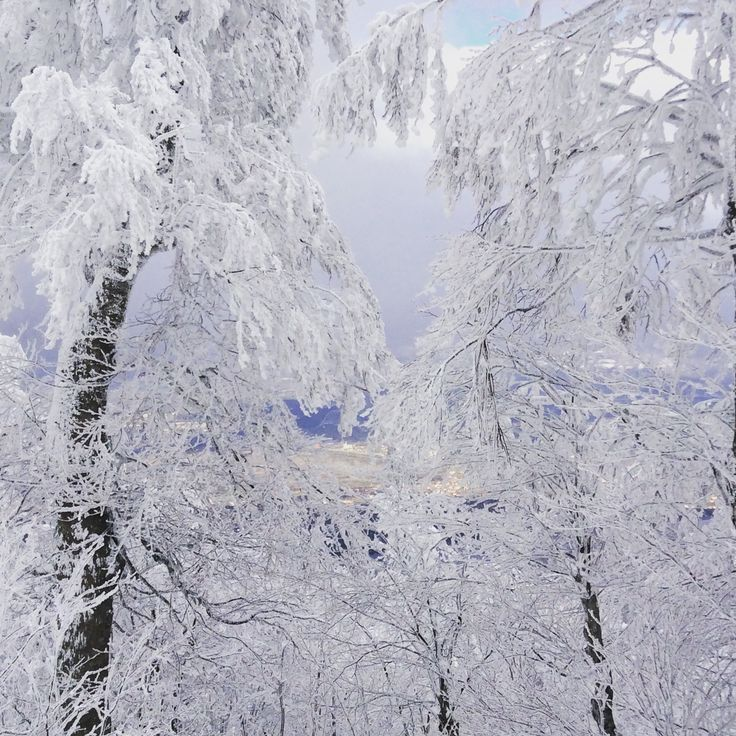 Magical view- winter