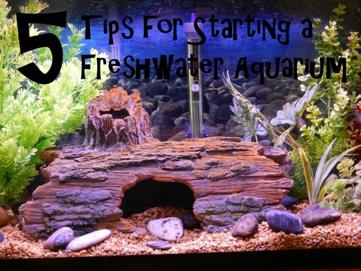 Discover 5 tips for starting a new freshwater aquarium that go beyond the setup guide that comes with the tank, and can help you get off to a good start.