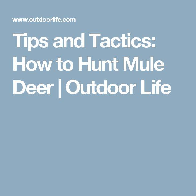 Tips and Tactics: How to Hunt Mule Deer | Outdoor Life