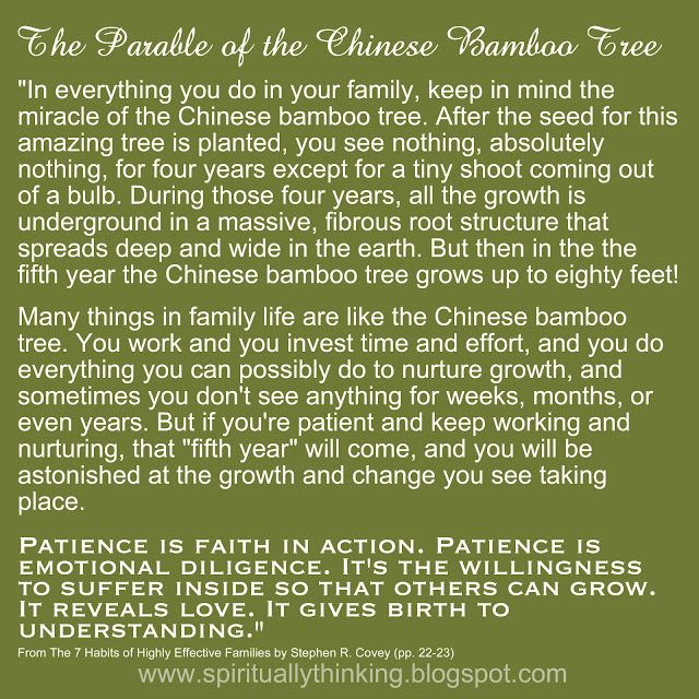 ....and Spiritually Speaking: The Parable of the Chinese Bamboo Tree