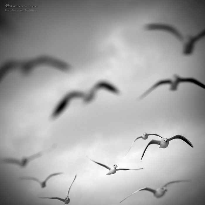 Untitled by Elwira  Kruszelnicka on 500px  #Lensbaby #seeinanewway