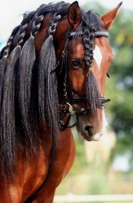 Best 25+ Horse hair braiding ideas only on Pinterest