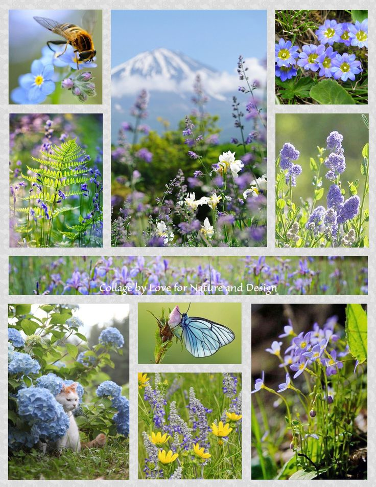 Mountain Wildflower Moodboard