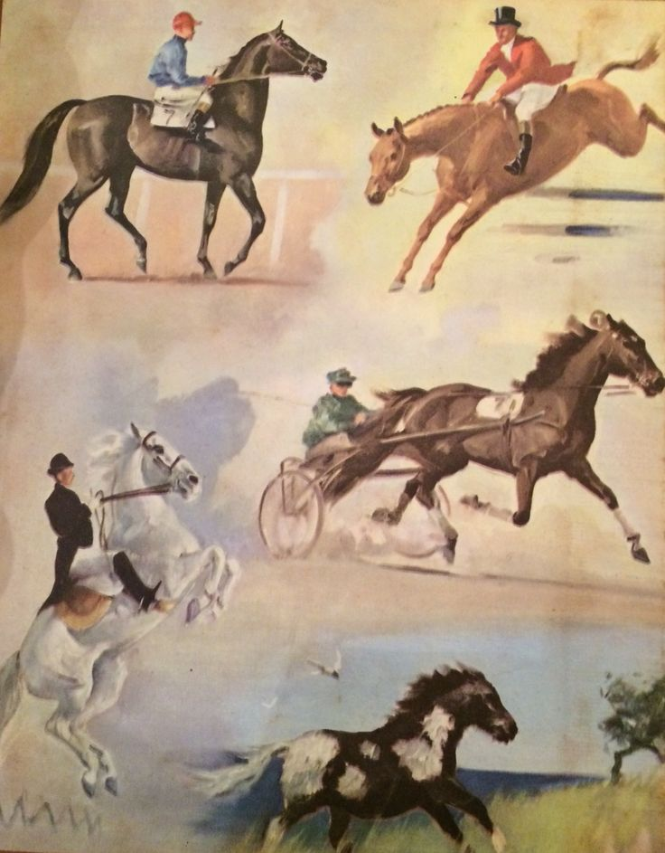 "From ""Album of Horses"" illustrated by Wesley Dennis Rand McNally 1953"