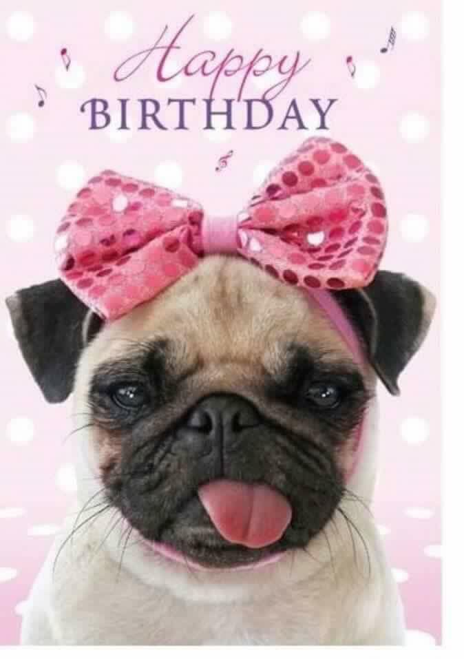 Pretty Girl Pug Wishing you Birthday Greeting's !!!