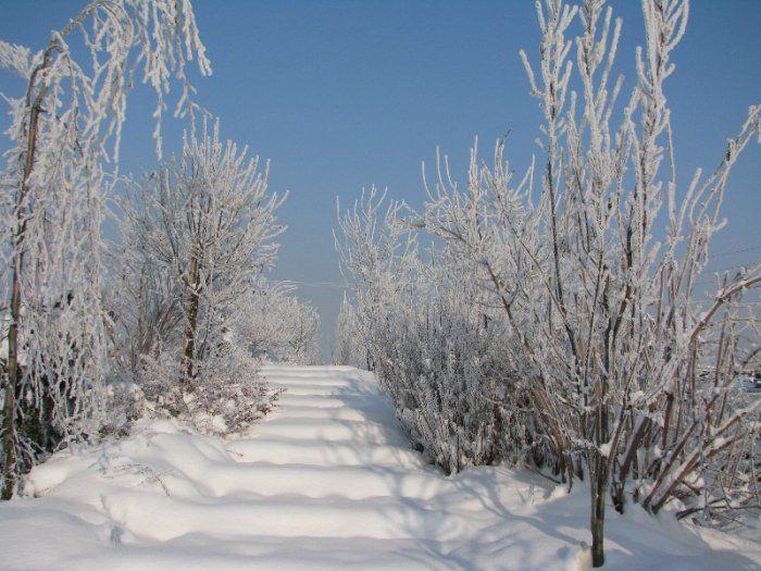 Schody w Ogrodzie pokryte śniegiem,