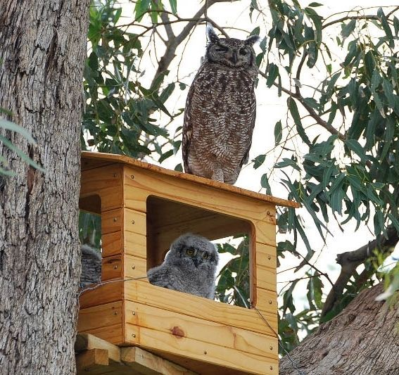 Best 25+ Owl house ideas on Pinterest | Owl box, Owl nest ...