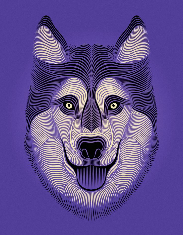 """Popatrz na ten projekt w @Behance: """"The Seattle Times • Huskies"""" https://www.behance.net/gallery/45172777/The-Seattle-Times-Huskies"""