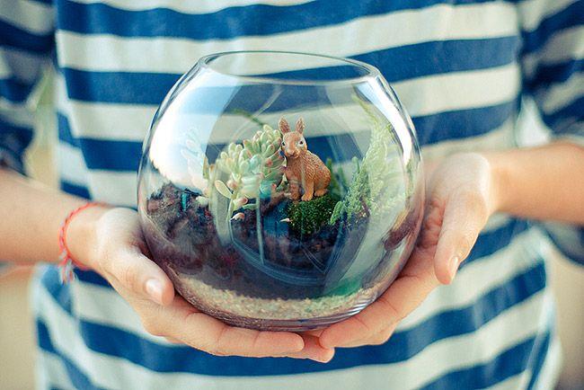 1000 id es sur le th me mini aquarium sur pinterest for Bocal aquarium original
