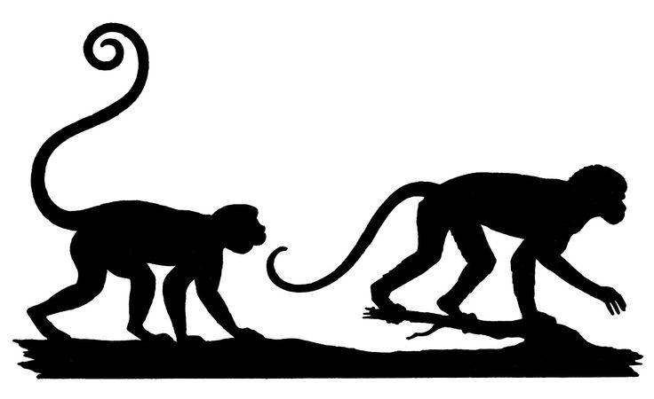 Vintage Silhouette Image - Monkeys