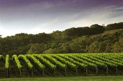 Margaret River Vineyards in the South West