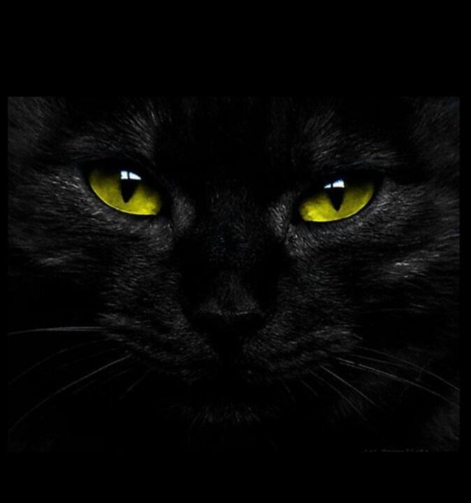 картинки черных кошек с зелеными глазами на аватарку