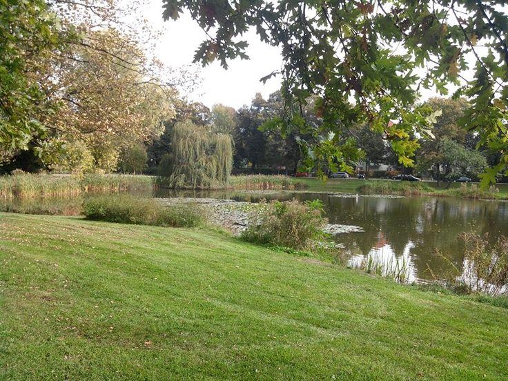 Nordseite des Teichs im Brettschneiderpark @StadtLeipzig. Die Trauerweide im Hintergrund ist herrlich.