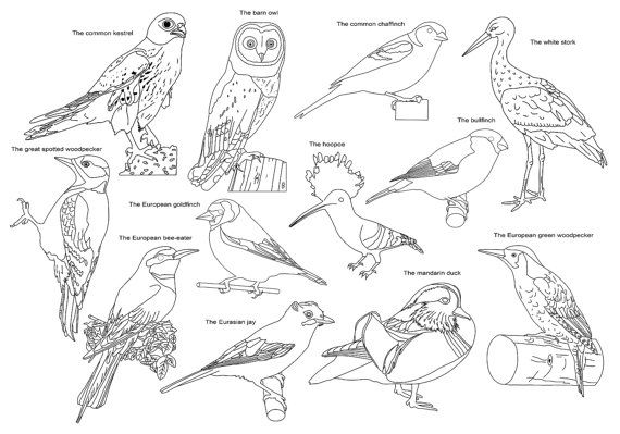 Adult Coloring Page Birds Poster Size Instant Download by Recyman