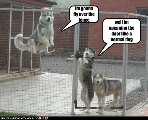 funny pets with captions | Dog pictures with funny captions, Funny pictures with captions