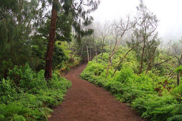 Road to kawah Ijen