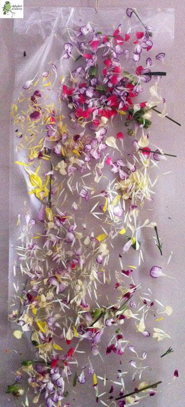 The children pulled apart flowers and flower petals and sprinkled them across a long sheet of sticky paper. We then put another piece of sticky paper on top ...