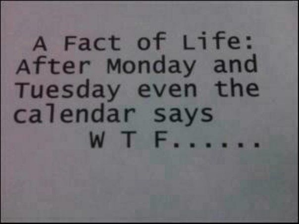 A fact of life: After Monday and Tuesday even the calendar says WTF: Quotes, Thought, Funny Stuff, So True, Facts Of Life, Humor, Wtf