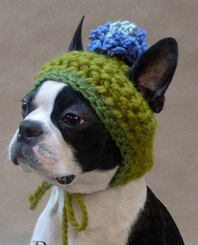 want the dog & the beanie!