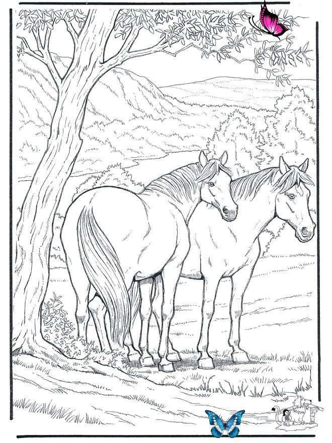 Free Coloring Pages For Adults Animals Coloring Pages Horses Free Coloring Pages Horse Br Horse Coloring Pages Animal Coloring Pages Horse Coloring