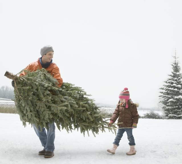 How to Keep Your Tree Fresh All Winter With a Homemade Preservative |  Christmas 2014 | Christmas, Homemade christmas tree, Cool christmas trees - How To Keep Your Tree Fresh All Winter With A Homemade Preservative
