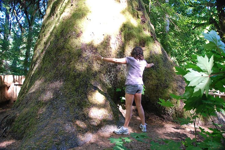 Vancouver Island is located in the temperate rainforest biome, with the mild climate and high rainfall combining to produce groves of massive old-growth trees. Some of the tallest stretch over 90 m…