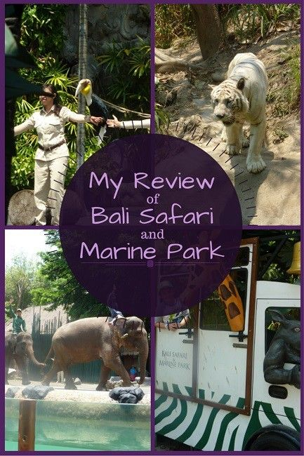 A Family Day Out at Bali Safari and Marine Park: A Review http://toddlersontour.com.au/a-family-day-out-at-bali-safari-and-marine-park-review/
