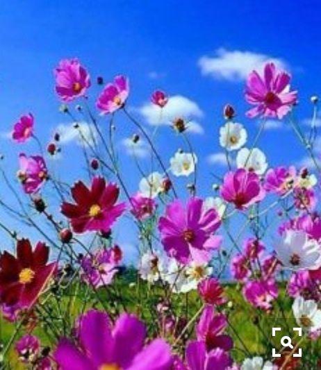 jardines flores primavera las flores mensajes blog aplicacin google facebook
