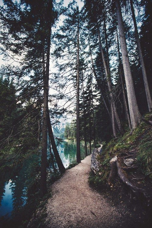 Imagen de nature, tree, and forest