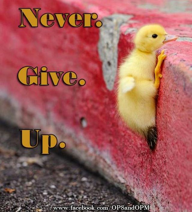 Never give up! Just like this chick :)