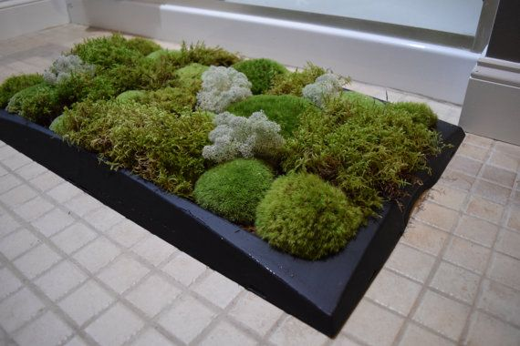 Moss Bath Mat kit Pillow Moss Black Tray Holiday by BPZoological