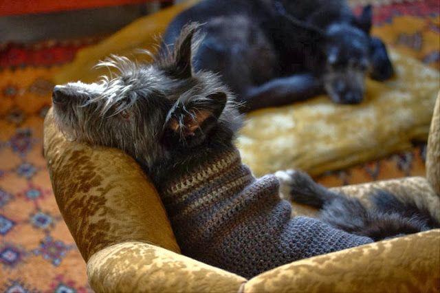 kolmas luonto, käsityöblogit, käsityöt, blogit, neulo koiralle, koiran vaatteet, neulonta, neuleet, koiran villapaita