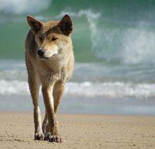 Fraser Island Photo Story