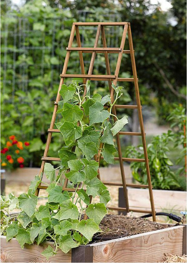 25 Beautiful Diy Trellis For Small Garden In 2020 With Images