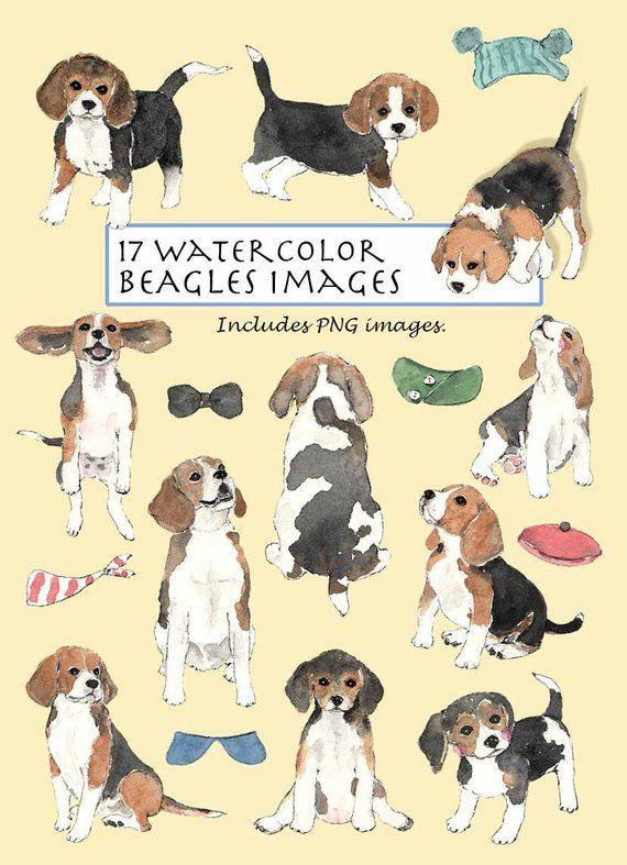 Clip Art Watercolor Beagles Set 17 Images Digital Download