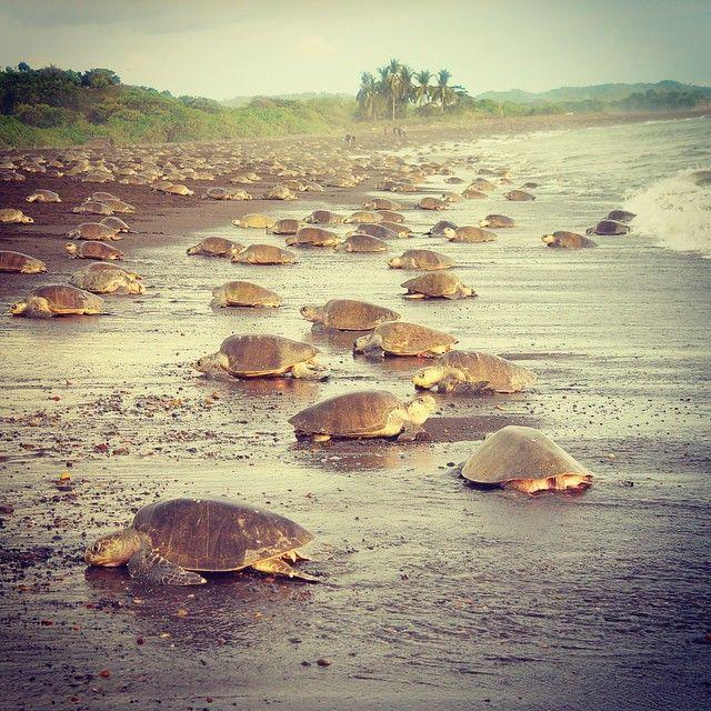 Es Parque Nacional Tortuguero. Está en la provincia de Limon de Costa Rica. Se puede ver las tortugas en la playa.