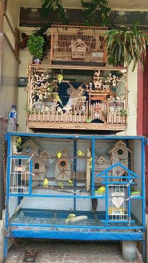 Kandang Burung dan perternakan Burung