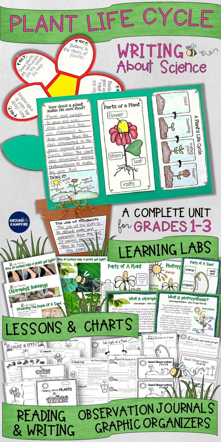 Are you looking for a fun way to get your first, second, or third graders writing about science? This complete unit for teaching the life cycle of plants does just that. Students write about the parts of a seed and plant, the job of the roots, chlorophyll, and how a plant make its own food. Includes 20 different activities, science lessons and experiments, anchor charts, art, plus a culminating foldable flower lapbook perfect for display and assessment. Ideal for 1st, 2nd, and 3rd grade…