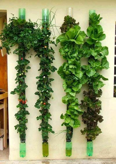 DIY vertical gardens02