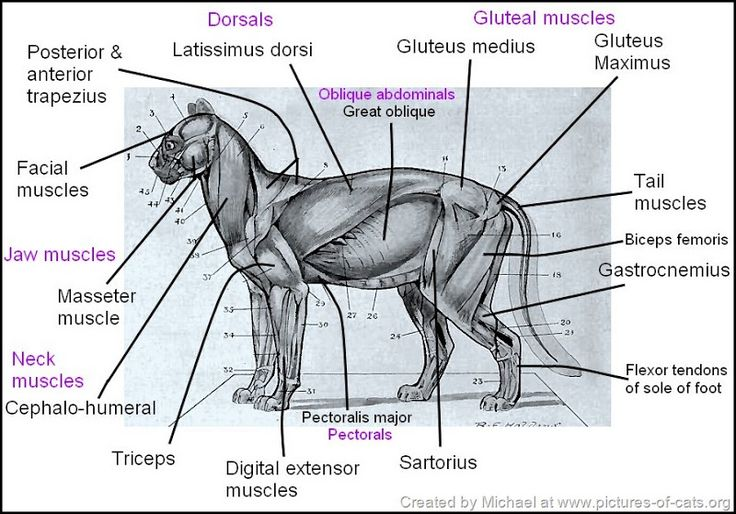Best 107 Animal Anatomy Ideas On Pinterest Animal Anatomy Draw