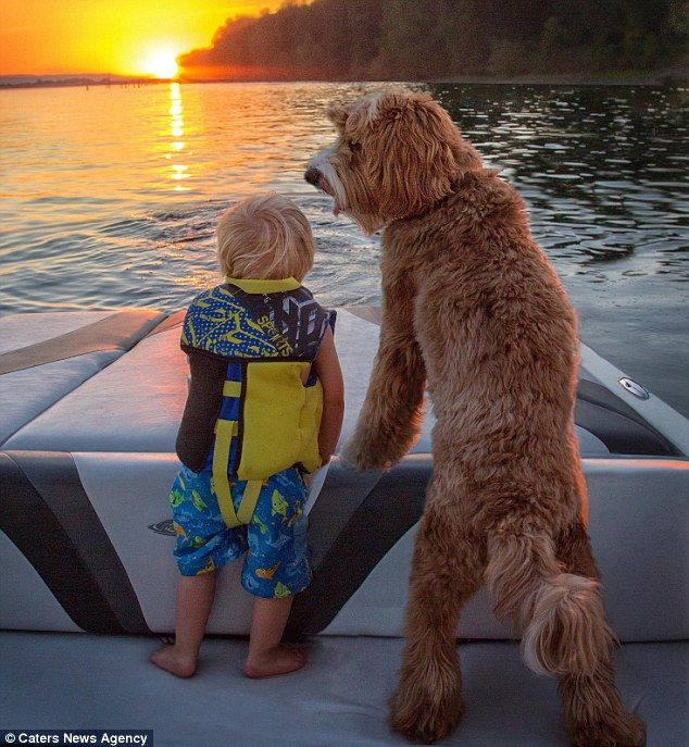 Look at that view: Ruddy and Reagan look out to the sunset after a boat trip...