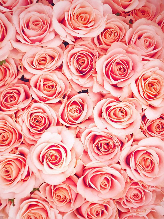 Tile Romantic Roses Background Colorful Roses Cool Backgrounds Pink Roses