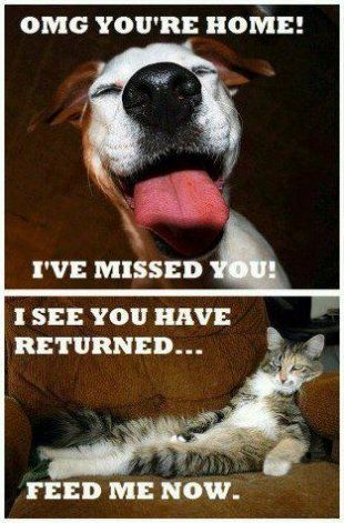 Dogs vs. Cats- so true.