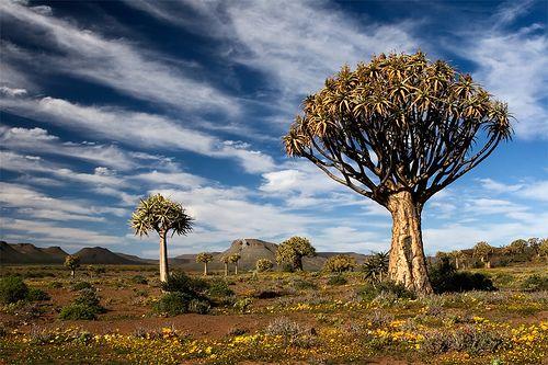 Namaqualand, Namibie