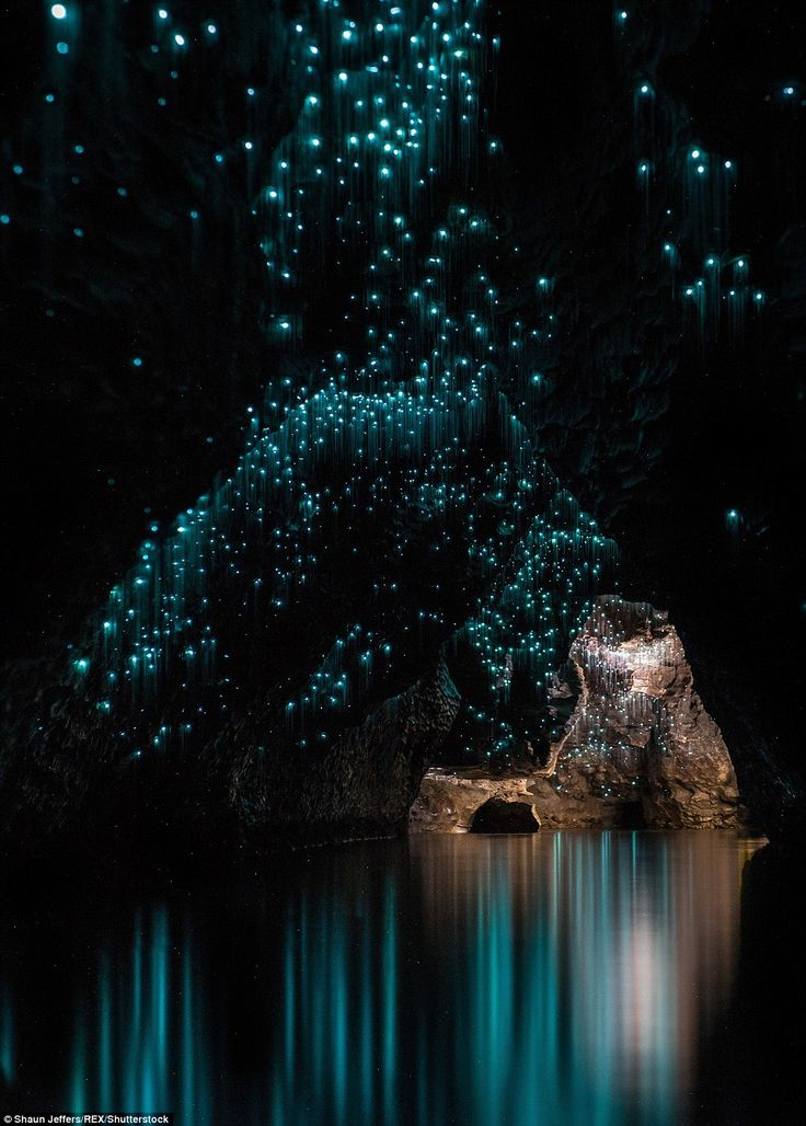The glow worms give the cave a magical feel, with a photograph of a cavern within the cave appearing as something from out of a movie
