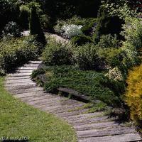 Urządzanie ogrodu: rośliny do miejsc zacienionych