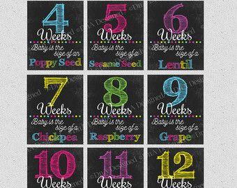 Bi Weekly Pregnancy Chalkboard Week Sign Digital by DnADesigned