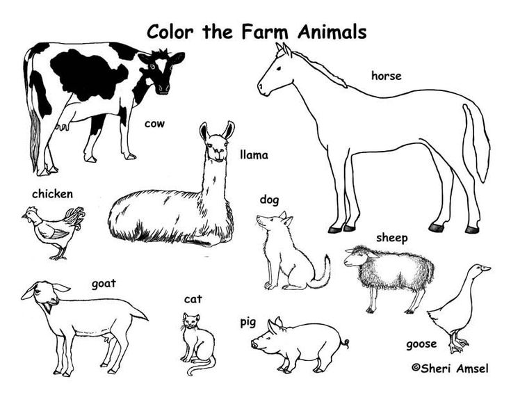 71 best Color Animals images on Pinterest | Animal coloring pages ...