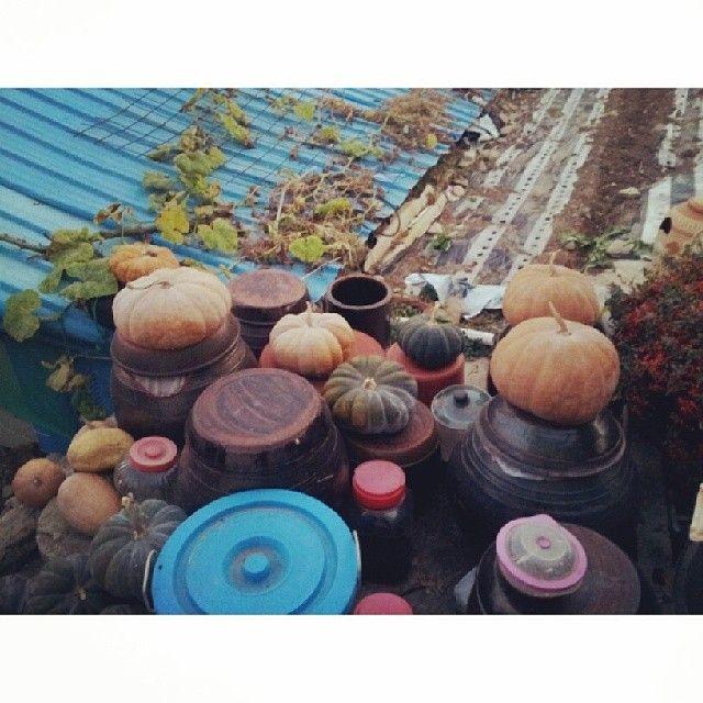 xxxkkimbo / #호박 #pumpkin #country #hometown #장독대 위에 놓인 귀요미 호박들 / #골목 #지붕 #살림 / 2013 11 25 /